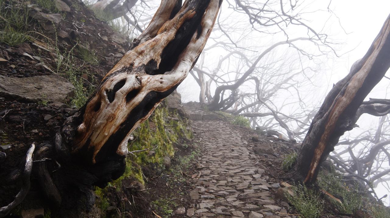 Pico Ariero, Pico Ruivo, Madeira