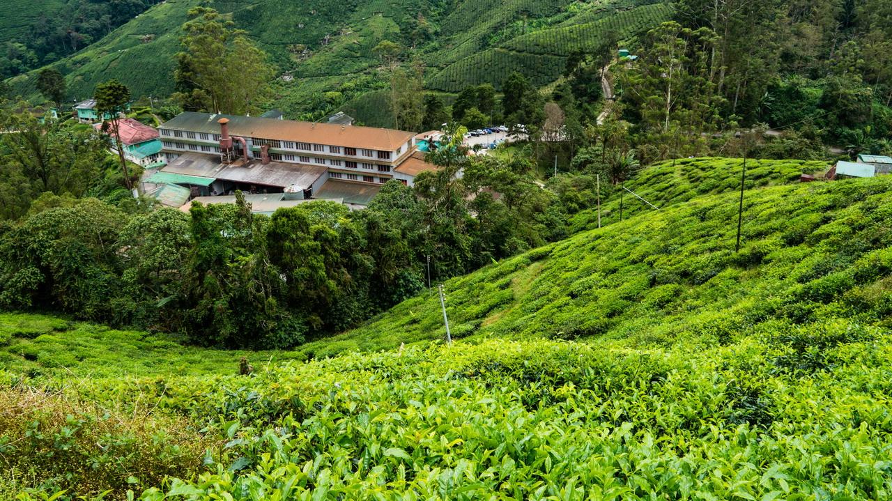 Cameron Highlands teagyár