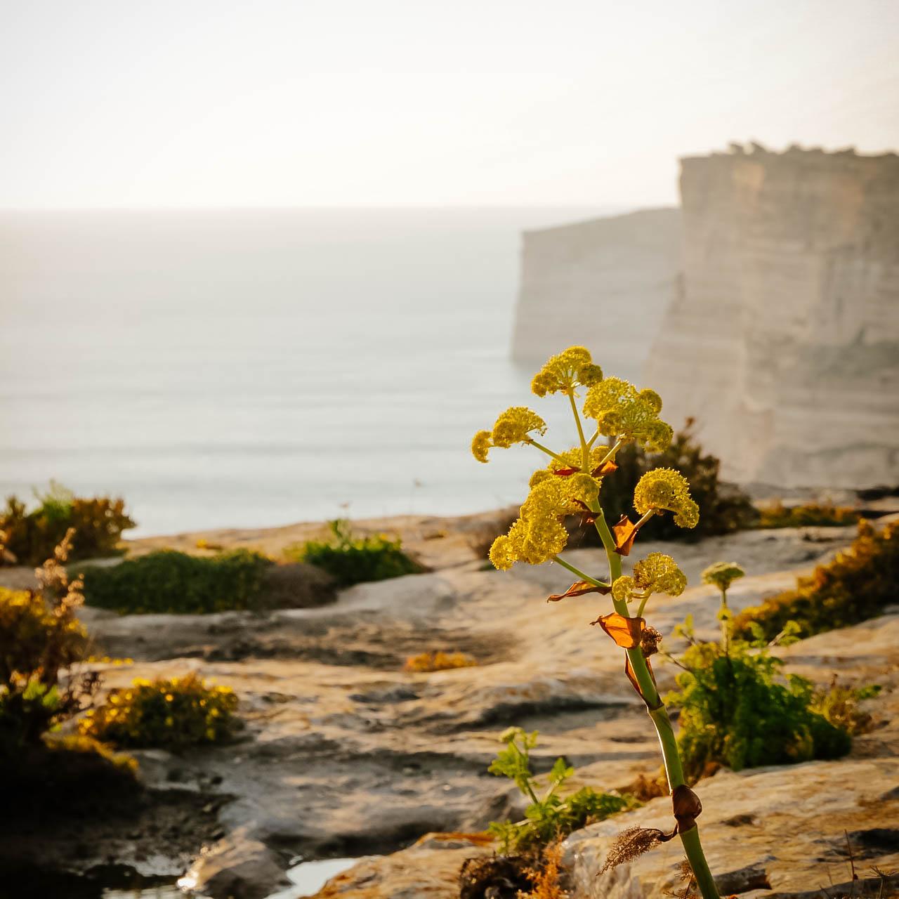 Ta'Cenc-szikla Gozo Málta