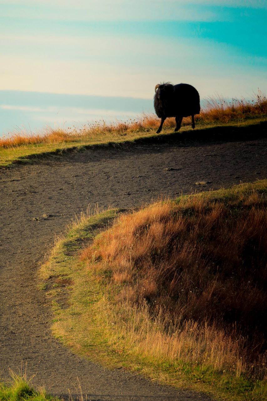 Izland fekete bárány