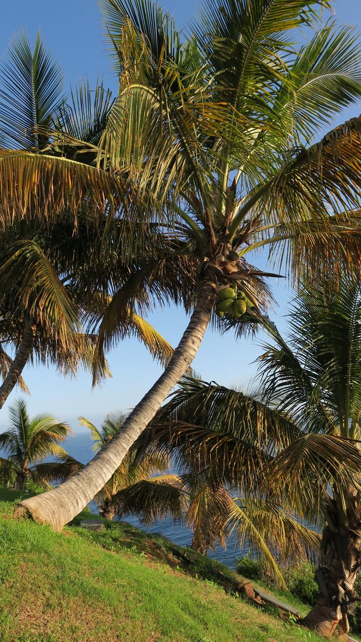 Palmentum pálma Santa Cruz de Tenerife