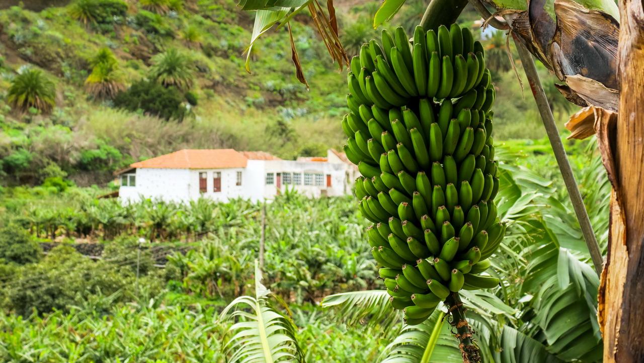 Hermigua banán